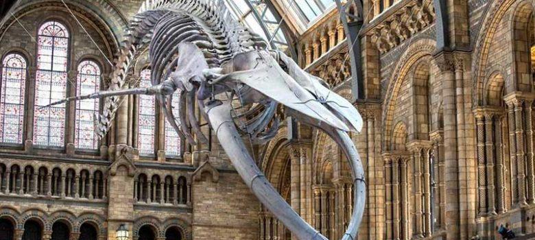 Natural-Museum