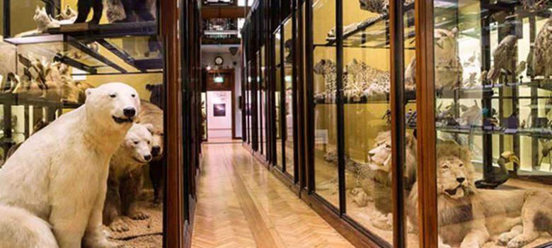 Natural-History-Museum-pic